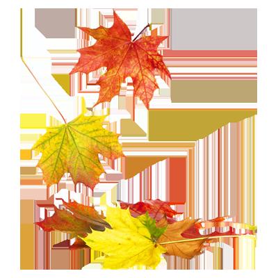 Herbst Hit